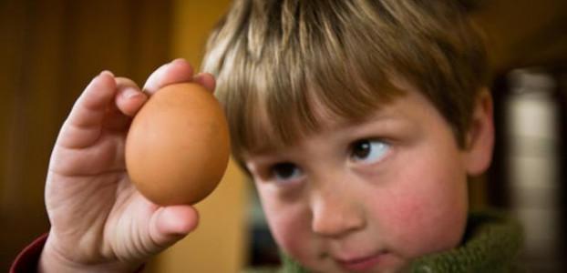 ребенку полезен белок